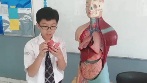 "Grade 7 ""Parts of Human Body"""