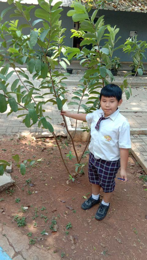 """Grade 3 """"Observasi Flora Sebagai Salah Satu Ciptaan Tuhan"""""""