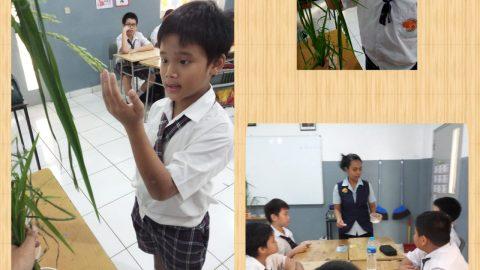 """Grade 5 """"Mengenal pertanian dan proses tanaman padi menjadi nasi yang dapat dikonsumsi"""""""
